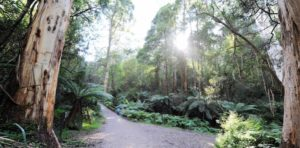 1000 steps back down 2 Ferntree Gully