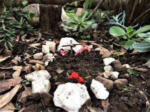 ASD pet death grief anger