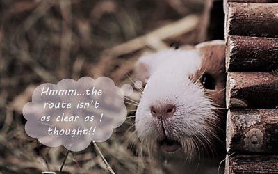 Guinea pig rescue!